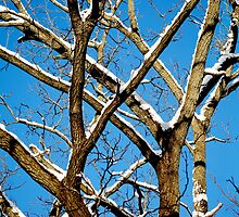 A Crisp Winter Day by Laurie Minor