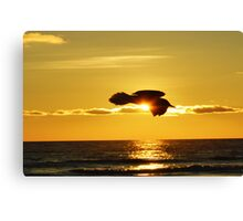 Soaring With Confidence Canvas Print