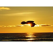 Soaring With Confidence Photographic Print