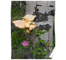 Aspen Fungi Poster