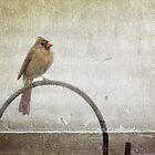 Lady cardinal by Lynn Starner