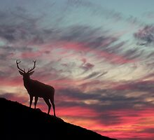 Deer at Dawn by David Alexander Elder