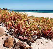 Australian Beaches by jwwallace