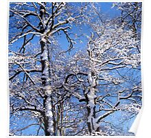 Snow covered beech trees on a sunny winter day Poster