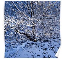 Snow covered beech tree and blue sky Poster