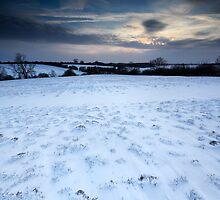 The Desolation of White by Andy Freer
