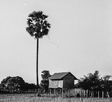 Rural Cambodia by TimothyAJ
