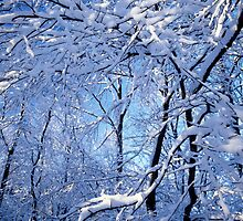 Snow-laden branches by intensivelight