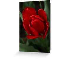 One Very Red Tulip in the Rain Greeting Card