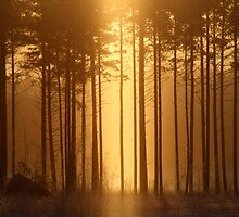 15.1.2014: Light in the Forest by Petri Volanen