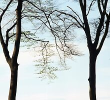 Two beech trees in spring by intensivelight