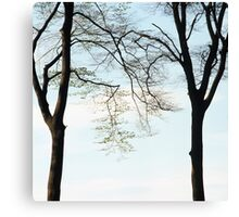 Two beech trees in spring Canvas Print