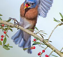 Caught you snacking by Bonnie T.  Barry
