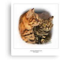 BLACK-FOOTED CAT 1 Canvas Print