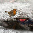 Robin and Shubunkin by JonnisArt