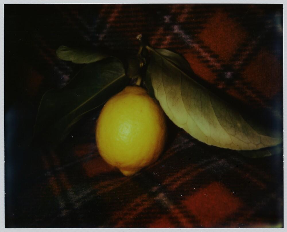 fallen fruit on fleece by Jill Auville