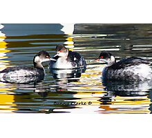 Grebes in Abstract Photographic Print