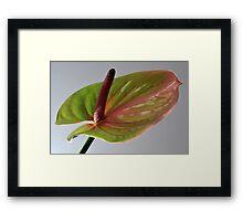 Nature's Artistry Framed Print