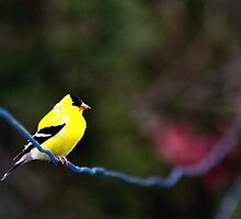 Bird on a Wire by Madeline Neff