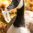 Autumn Goose by Dominika Aniola