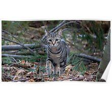 Explorer Kitten Poster
