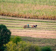 Harvesting The Old Way by Gene Walls