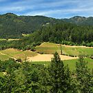 Wine Country Panorama by James Eddy