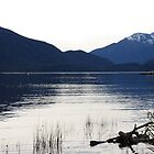 Lake Te Anua, Quiet Mood by Catherine Davis