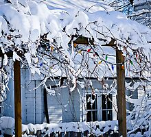 Front yard of a Toronto house in winter by Elena Elisseeva