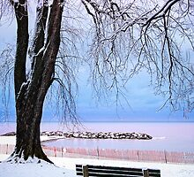 Winter park in Toronto by Elena Elisseeva