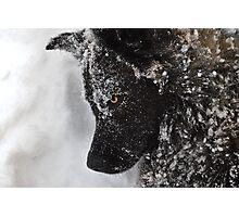 Wolf Dog Photographic Print