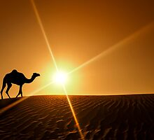 Silhouette of a camel walking alone in the Dubai desert by naufalmq