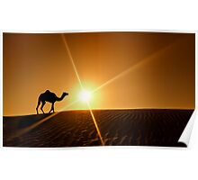 Silhouette of a camel walking alone in the Dubai desert Poster