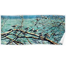 Birds on a Branch Poster