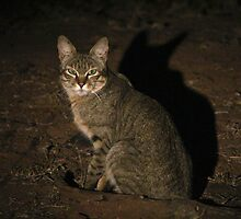 African Wild Cat by JenniferEllen