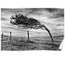 Prevailing winds Poster