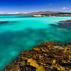 Aqua & Weed - Bay of Fires, Tasmania by clickedbynic