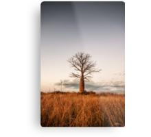 Kimberley Boab Tree Metal Print