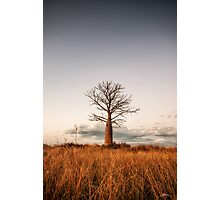 Kimberley Boab Tree Photographic Print