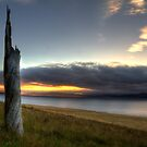 Stumped - Droughty Point, Tasmania by clickedbynic