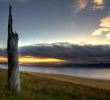 Stumped - Droughty Point, Tasmania by clickedbynic
