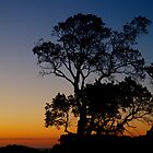 Evening trees by collpics