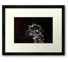 16.1.2014: Pine Trees at Winter Morning Framed Print