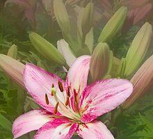 Lilycrest Sweetheart by Marilyn Cornwell