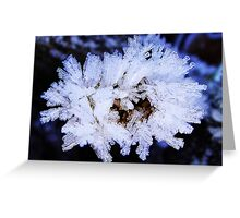 Cool white frost Greeting Card