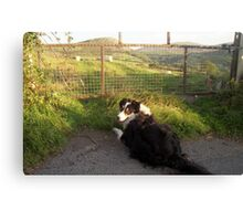 Laddie in the Hills of Llanfairfechan Canvas Print