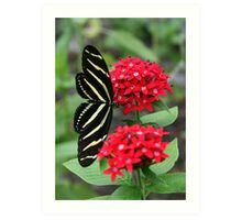 Zebra Longwing Butterfly Art Print