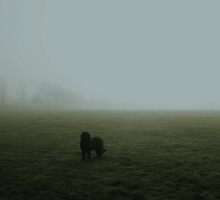 Spooky Fog by Vicki Spindler (VHS Photography)
