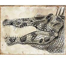 Spinosaurus Head Study Photographic Print