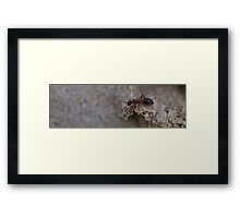 It's a big world for little things Framed Print